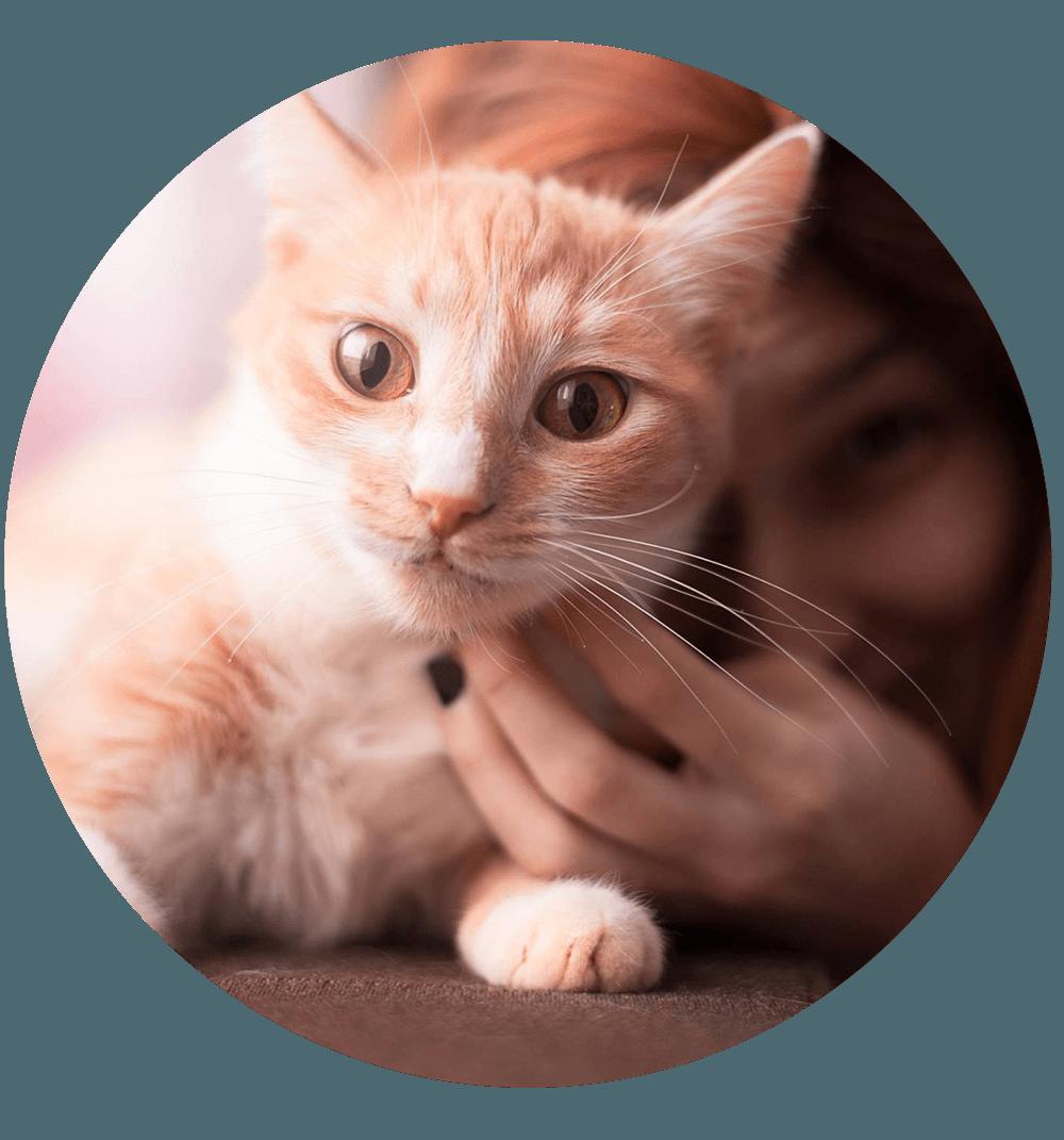 Cat, epspictures